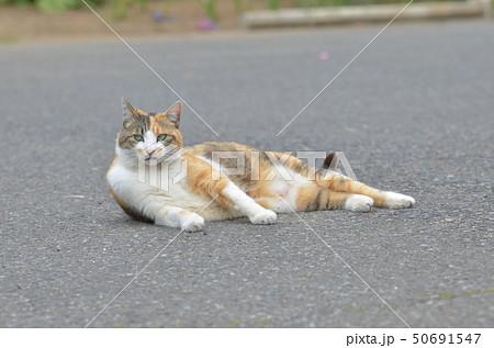 外猫 50691547
