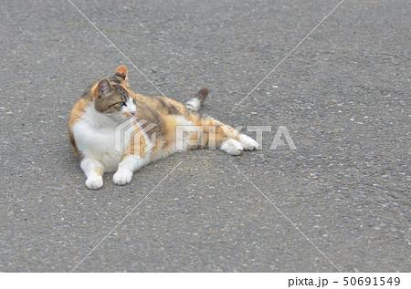 外猫 50691549