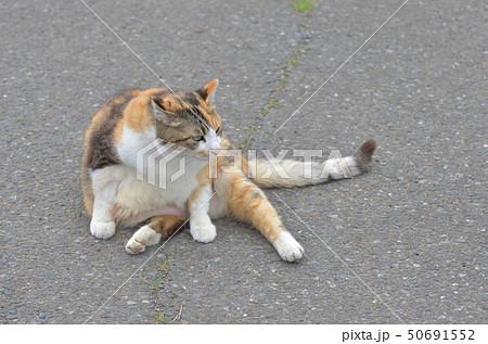 外猫 50691552