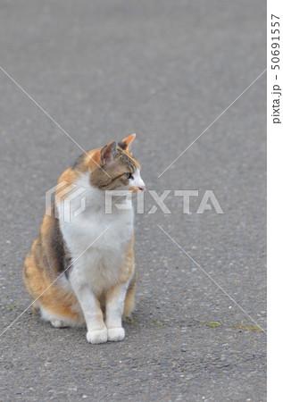 外猫 50691557