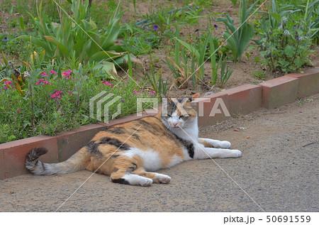 外猫 50691559