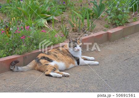 外猫 50691561