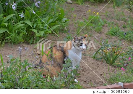 外猫 50691566