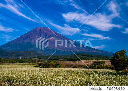 (静岡県)須山のソバ畑と富士山 50693950
