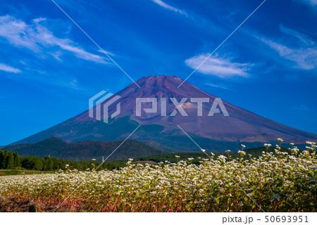 (静岡県)須山のソバ畑と富士山 50693951