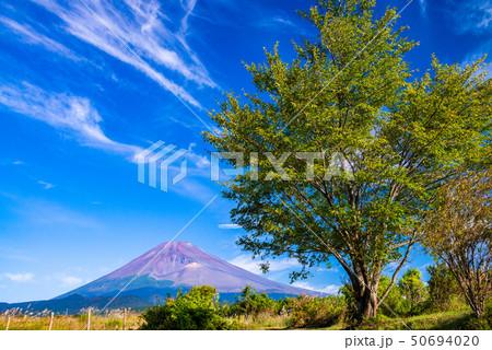 (静岡県)須山から望む富士山 50694020