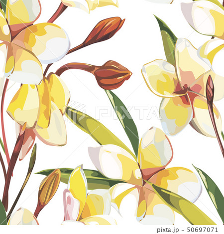 Elegance seamless pattern in vintage style with Plumeria flowers. Tropical illustrations. 50697071