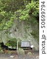伊豆半島ジオパーク、弁天島の海底火山噴火の痕跡、静岡県松崎町にて 50699794