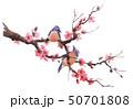 Watercolor sakura branch 50701808