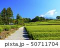 茶畑(初夏) 50711704