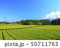 茶畑(初夏) 50711763