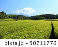 茶畑(初夏) 50711776