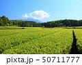 茶畑(初夏) 50711777