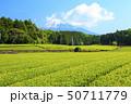 茶畑(初夏) 50711779