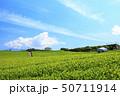 茶畑(初夏) 50711914
