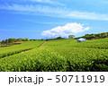 茶畑(初夏) 50711919