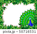A peacock on nature border 50716531