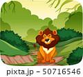 Lion in nature scene 50716546