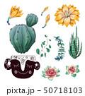 さぼてん サボテン 仙人掌のイラスト 50718103