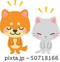 おじぎをする犬と猫 50718166