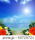 背景-南国-海-空-夏-ビーチ-ハイビスカス 50720721