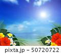 背景-南国-海-空-夏-ビーチ-ハイビスカス 50720722