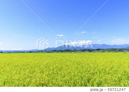 東北の稲作 50721247