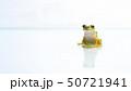 アマガエル 雨蛙 50721941