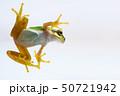 アマガエル 雨蛙 50721942