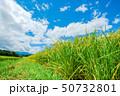 稲 日本 穀物の写真 50732801