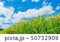 稲 日本 穀物の写真 50732909