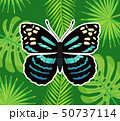 Butterfly of Blue Color, Palm Leaves and Branches 50737114
