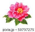 rose19515pix7 50737275
