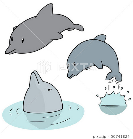 vector set of dolphin 50741824