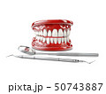 White healthy perfect teeth plastic model. Dental health 3d illustration 50743887