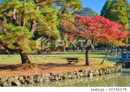 奈良公園の朝 50746179