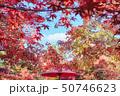 紅葉のイメージ素材 50746623