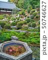 東福寺の日本庭園 50746627