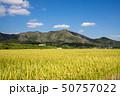 稲 水田 米の写真 50757022