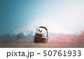 チワワと桜と富士山 50761933