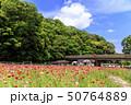 花の国(初夏) 50764889