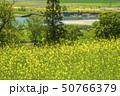 信州 長野県飯山市菜の花公園からみる千曲川 50766379