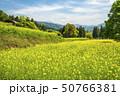 信州 長野県飯山市菜の花公園 50766381