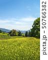 信州 長野県飯山市菜の花公園 50766382