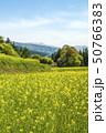 信州 長野県飯山市菜の花公園 50766383