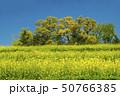 信州 長野県飯山市菜の花公園 50766385