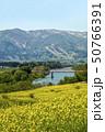 信州 長野県飯山市菜の花公園からみる千曲川にかかる大関橋と戸狩温泉スキー場 50766391