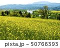 信州 長野県飯山市菜の花公園からみる千曲川と斑尾高原 50766393
