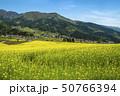 信州 長野県飯山市菜の花公園からみる千曲川と飯山市郊外 50766394