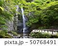 箕面大滝 新緑(大阪府箕面市) 50768491